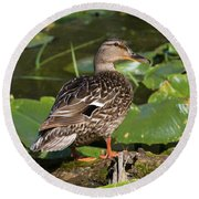 Female Mallard Among Lily Pads Round Beach Towel
