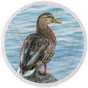 Female Mallard At The River Round Beach Towel