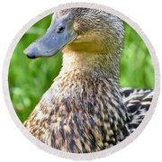 Female Mallard Duck Close Up Round Beach Towel