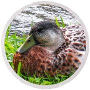 Female Mallard Duck Resting 4 Round Beach Towel