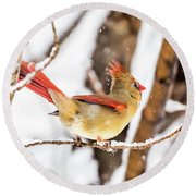 Female Northern Cardinal In The Snow Round Beach Towel