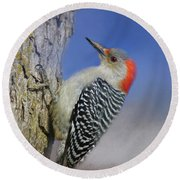 Female Red-bellied Woodpecker Round Beach Towel