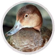 Female Redhead Duck Round Beach Towel