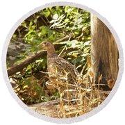 Female Ring-necked Pheasant - Phasianus Colchicus Round Beach Towel