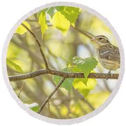 Female Rose-breasted Grosbeak Round Beach Towel