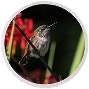 Female Rufous Hummingbird Round Beach Towel