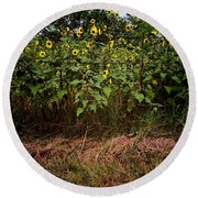 Fence Line Sunflowers Round Beach Towel