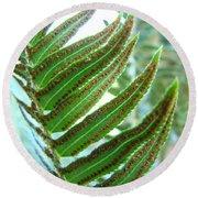 Fern Art Print Green Forest Ferns Baslee Troutman Round Beach Towel