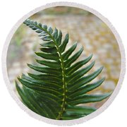 Fern Art Prints Green Garden Fern Branch Botanical Baslee Troutman Round Beach Towel