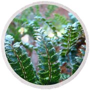 Fern Art Prints Green Sunlit Forest Ferns Giclee Baslee Troutman Round Beach Towel