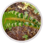 Fern Branch Leaves Art Prints Forest Ferns Natures Baslee Troutman Round Beach Towel