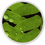 Fern Close-up With Water Droplets  Round Beach Towel