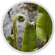 Fern Study At Blarney Castle Ireland Round Beach Towel