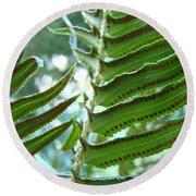 Ferns Art Prints Green Forest Fern Sunlit Giclee Baslee Troutman Round Beach Towel
