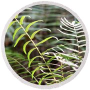 Ferns In Natural Light Round Beach Towel