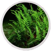 Ferns On The West Virginia At Round Beach Towel