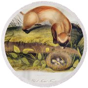 Ferret Round Beach Towel