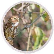 Ferruginous Pygmy-owl Round Beach Towel