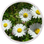 Field Of White Daisy Flowers Art Prints Summer Round Beach Towel