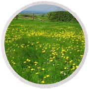 Field With Yellow Flowers Round Beach Towel