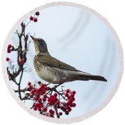 Fieldfare - 2 Round Beach Towel
