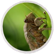 Final Instar Of A Cicada Emerging From The Ground To Molt On A L Round Beach Towel