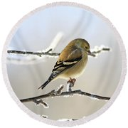 Finch On Frosty Perch Round Beach Towel