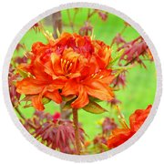 Fine Art Floral Art Prints Canvas Orange Rhodies Baslee Troutman Round Beach Towel