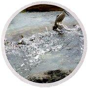 Fine Feathered Fisherman Round Beach Towel