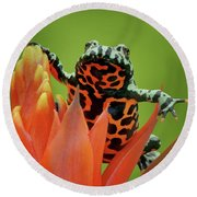 Fire-bellied Toad Round Beach Towel