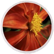 Fire Dahlia Round Beach Towel
