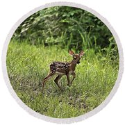 First Baby Fawn Of The Year Round Beach Towel