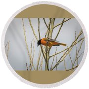First Baltimore Oriole Of The Year  Round Beach Towel