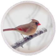 First Snow - Female Cardinal Bird With Vignette Round Beach Towel
