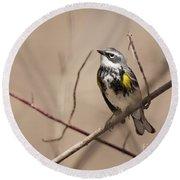 First Warbler Back Yellow Rumped Warbler Round Beach Towel