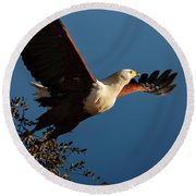 Fish Eagle Taking Flight Round Beach Towel
