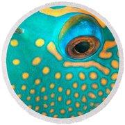 Fish Eye Round Beach Towel