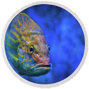 Fish Frown Story Round Beach Towel