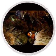 Fish In Sea Anemones Aquarium Round Beach Towel