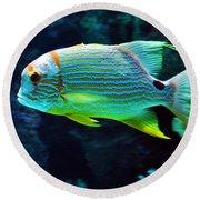 Fish No.3 Round Beach Towel