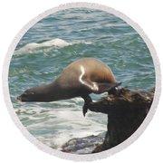 Fishing Sea Lion Round Beach Towel