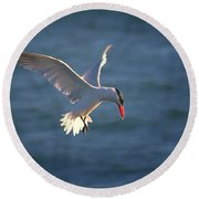 Fishing Tern Round Beach Towel