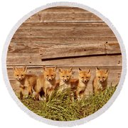 Five Fox Kits By Old Saskatchewan Granary Round Beach Towel
