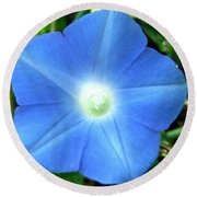 Five Point Star Morning Glory  Round Beach Towel