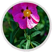 Orchid Rock Rose At Pilgrim Place In Claremont-california  Round Beach Towel