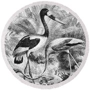 Flamingo & Jabiru Round Beach Towel