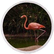 Flamingo 1 San Diego Zoo Round Beach Towel