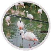 Flamingo Bath  Round Beach Towel