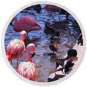 Flamingo Family  Round Beach Towel