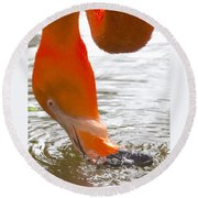 Flamingo Feeding Round Beach Towel